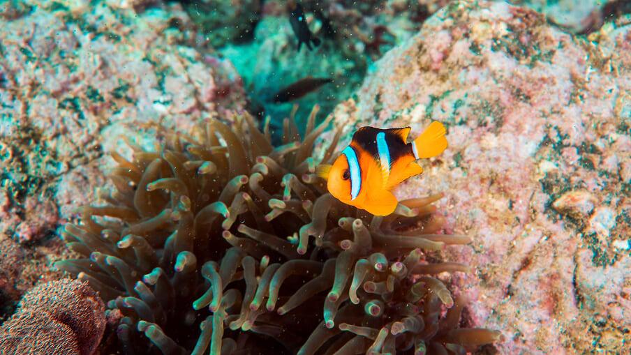 Scuba Diving in Dubai and Fujairah