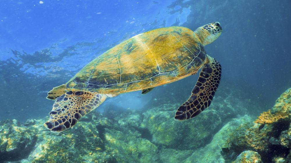 Snorkeling in Dubai and Fujairah