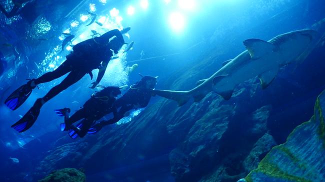 Scuba Diving Center in Fujairah