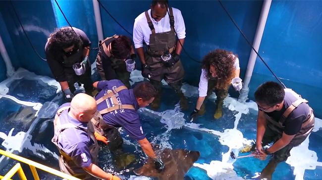 Aquarium Diving in Dubai