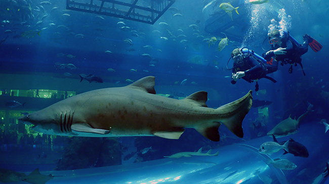 Snorkeling in Dubai