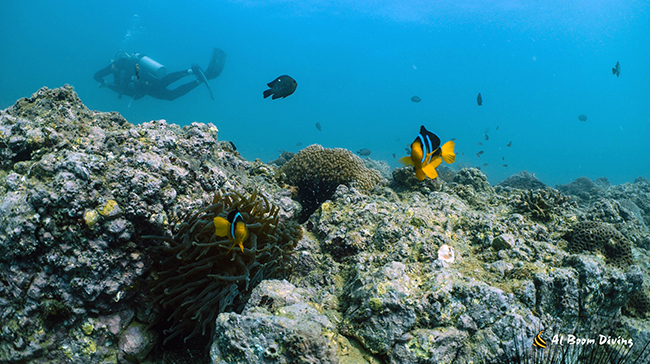 Scuba Diving in Dubai Mall Auariam