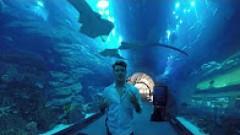 Shark Encounter at Dubai Aquarium and Underwater Zoo with Al Boom Diving