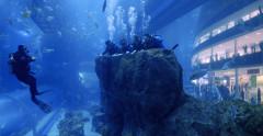 Diving in Dubai Aquarium and other in-water activities