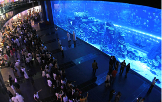 Dubai aquarium and underwater zoo at the Dubai Mall - One of the largest suspended aquarium in the world