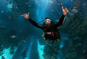 Shark Dive at Dubai Aquarium and Underwater Zoo Aquarium