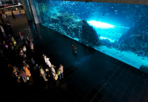 Shark Dive at Dubai Aquarium and Underwater Zoo Aquarium 2