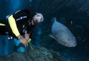 Shark Dive at Dubai Aquarium and Underwater Zoo Aquarium 3
