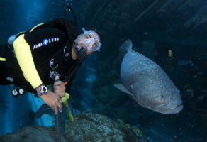 PADI Distinctive Specialty Dubai Aquarium and Underwater Zoo Course (3 Dives) 1