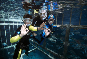 Snorkeling in Dubai Aquarium and Underwater Zoo Cage