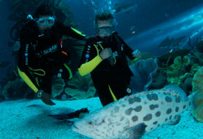 Discover Scuba Diving in Dubai Aquarium (Full Training in Aquarium)