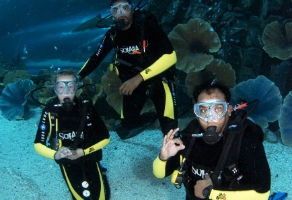 Discover Scuba Diving in Dubai Aquarium 2
