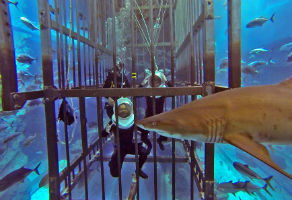 Shark Walker in Dubai Aquarium and Underwater Zoo