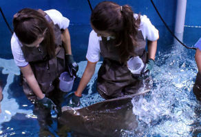 Ray Encounter at Dubai Aquarium and Underwater Zoo