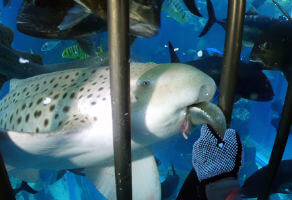 Shark Encounter at Dubai Aquarium and Underwater Zoo