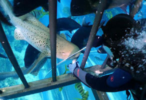 Shark Encounter at Dubai Aquarium and Underwater Zoo 2