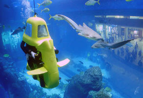Shark Scooter at Dubai Aquarium and Underwater Zoo for One 3