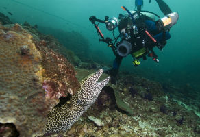 PADI Digital Underwater Photography Course 2