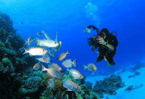 Daymaniyat Islands Trip - 2 Days Diving + 2 Days Snorkeling for x 1 Person + Hotel