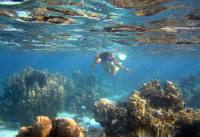 Snorkeling in Fujairah - 2 Sites with Full Equipment